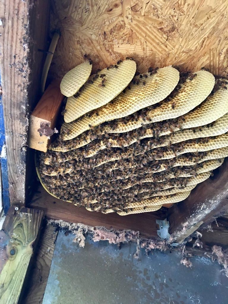 Forsyth County Beekeepers Association of NC - SWARM & BEE